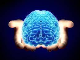 Hands Holding Blue Brain